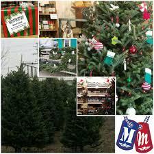 Menards Christmas Trees White by Christmas Trees Siegel U0027s Cottonwood Farm