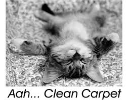Carpet Cleaning Meme - cat aah clean carpet backpage template