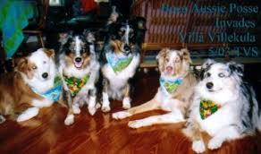 Cottages That Allow Dogs by St Augustine Pet Friendly Vacation Rentals U0026 Pet Friendly Lodging