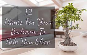 10 Best Houseplants To De by Plants For Your Bedroom To Help You Sleep
