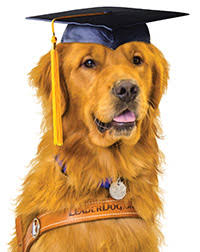 dog graduation cap class of 2015 leader dogs for the blind