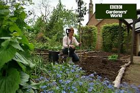 cut back ornamental grasses gardenersworld