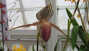 biggest house plants 7 of the most expensive flowers in the world mnn mother nature