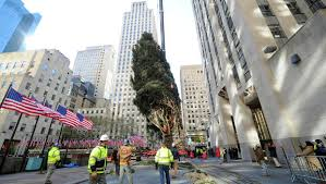 2017 rockefeller center tree arrives in new york city