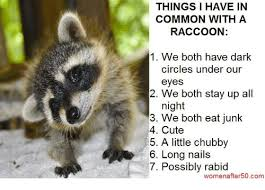 Raccoon Excellent Meme - things i have in common with a raccoon 1 we both have dark circles