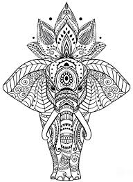 animal animal coloring book coloring book pictures of animals