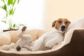 comment empecher chien de monter sur le canapé mon chien monte sur le canapé tout ce qu il faut savoir sur les