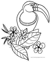 tucan color page parrot coloring pages color plate coloring