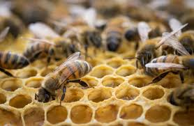 bees archives atlanta u0027s hometown honey
