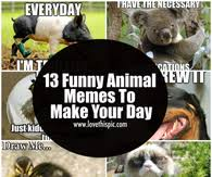 Clean Animal Memes - animal memes pictures photos images and pics for facebook