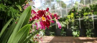 orchid plants for sale gently used plant sale atlanta botanical garden