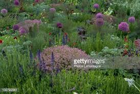 mixed herb and perennial garden including thyme stock photo