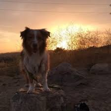 australian shepherd los angeles ascot hills park 218 photos u0026 52 reviews parks 4371