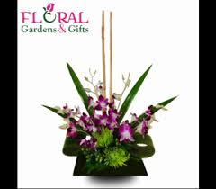 dendrobium zen in palm beach gardens fl floral gardens u0026 gifts