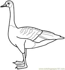 duck coloring 07 coloring free ducks coloring pages