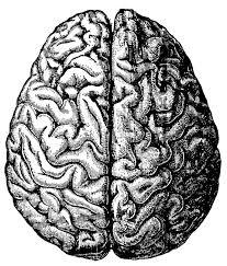 free vintage brain graphics fab n free