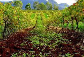 hunter valley wine wikipedia