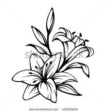 Flower Drawings Black And White - lily flower stock images royalty free images u0026 vectors shutterstock