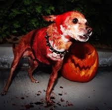 Halloween Dog Costume 9 Genuinely Terrifying Halloween Dog Costumes Metro