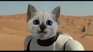 cat fact 71 actual possible cat sith 2025 words new record i