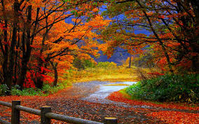hd wallpapers photo collection autumn fall wallpaper hd