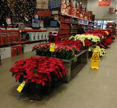 home depot black friday poinsettia use poinsettias to spread holiday cheer the home depot community