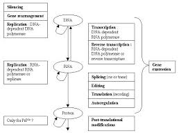 the central dogma of molecular biology i e the bioinformation