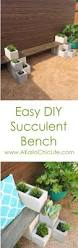 diy it outdoor succulent bench garden projects backyard and bench