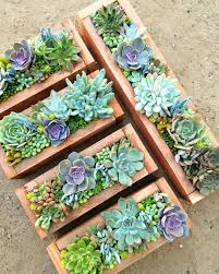 Succulent Gardens Ideas Best 25 Succulents Garden Ideas On Pinterest 重庆幸运农场倍投