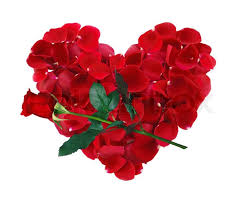 flower pic beautiful heart of red rose petals and rose flower isolated on