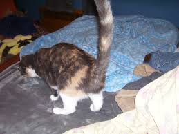 blog hops archives http 15andmeowing comhttp 15andmeowing com