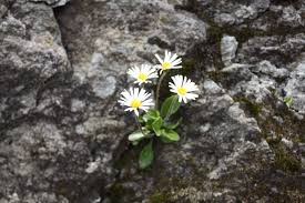free images blossom flora wildflower rarely flowering plant