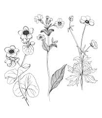 floral drawings free download clip art free clip art on