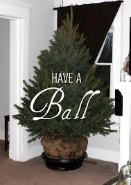 christmas trees live christmas lights decoration