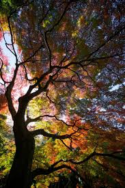 66 best trees images on pinterest draw fantasy art and nature