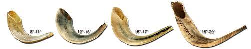 rams horn shofar rams horn shofar