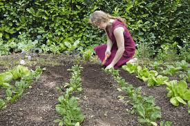 what is organic gardening definition