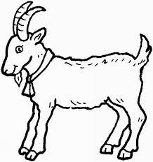 coloriage chèvre à colorier dessin à imprimer three billy