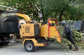 tree removal burleson trimming removals major brush removal