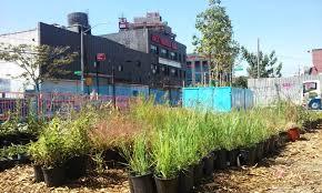 native plant nursery gcc pop up nursery brooklyn u0027s gowanus canal conservancy