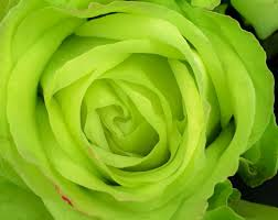 green roses 10 color meaning explanations meaning of colors