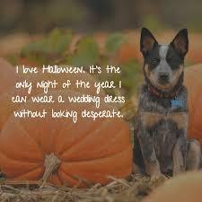 funny halloween quotes halloween quotes funny glendalehalloween