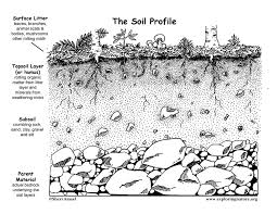 dirt on dirt why is soil important