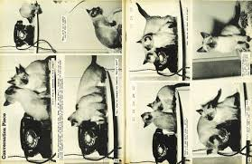 thumbnails gisborne photo news no 59 may 28 1959