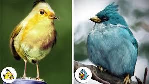 angry birds u2013 sun