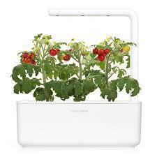 mini tomato grow fresh food at home click u0026 grow