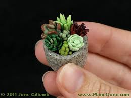cute succulents keep a garden in your pocket cute idea create a faux succulent