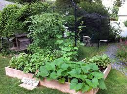 vegetable gardening tips for the dog days of summer edible long
