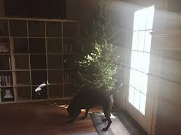 my our first real christmas tree the active spirit