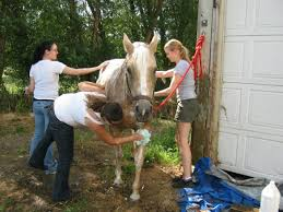 The Healing Barn Healing Horses And Humans Rightsizelife Com